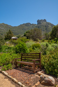 Kirstenbosch National Botanical_2070