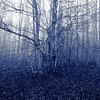 Alder forest in autumn - monochrome