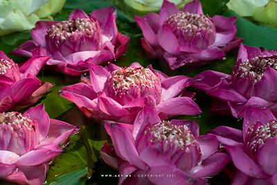 Flower, Plant & Nature