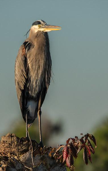 Tamron Lens - Viera Wetlands 12/14