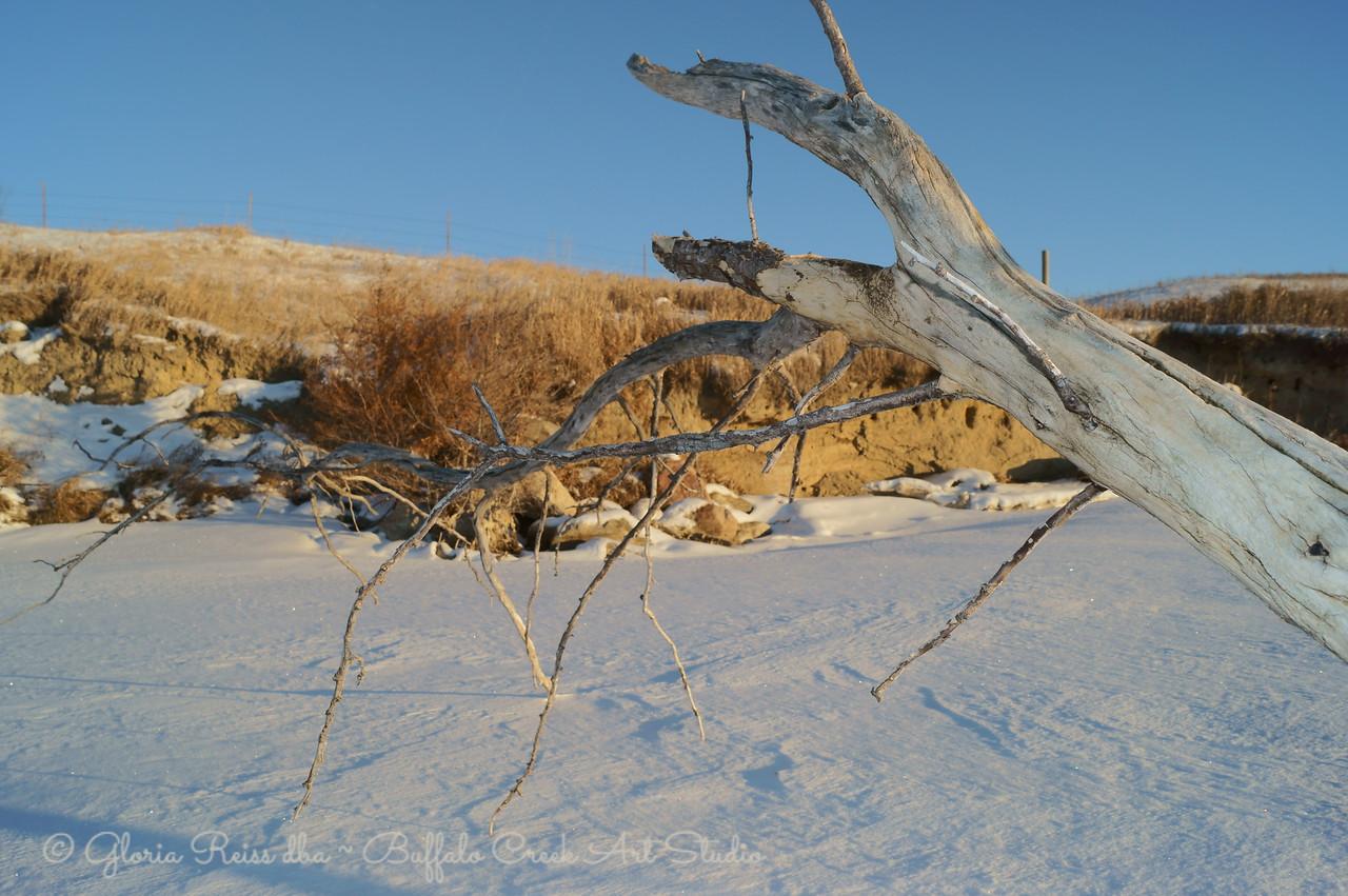 dead tree frozen into the lake