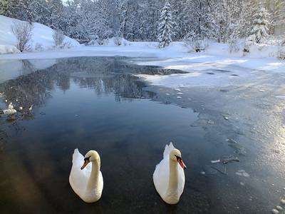 Winter Wonderland Dec 2012