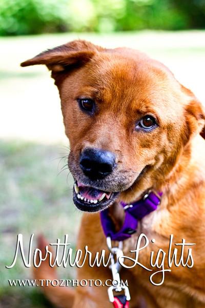 BARCS Adoptable Dogs