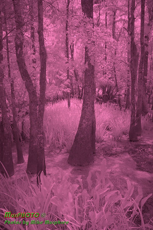 Swamp Scenes and more