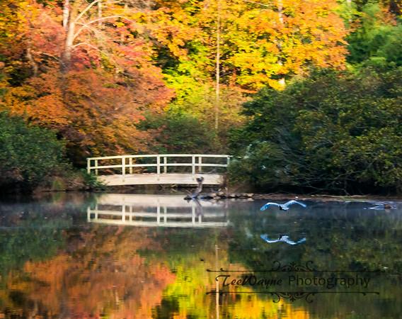 Lake Symphony - Cary, NC