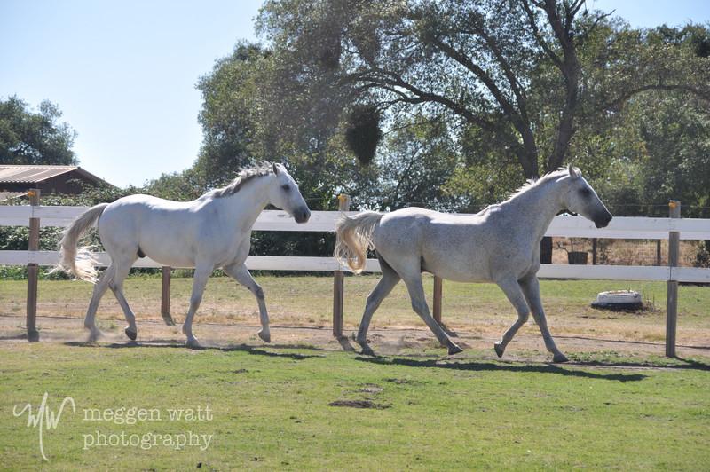 EB&Horses-138.jpg