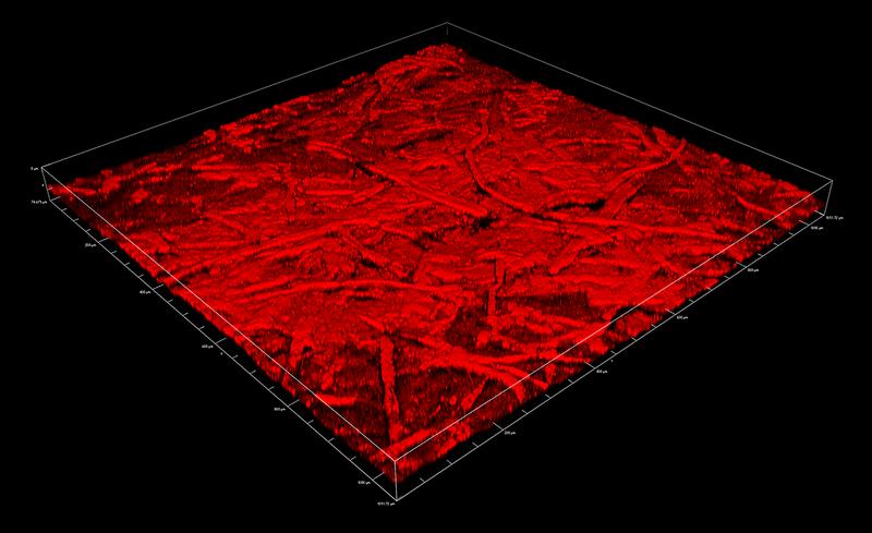 Malaya Straits Settlements KGVI 1941 15c rough paper surface reflectance confocal microscopy