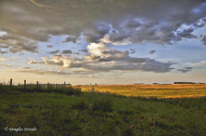 2010   Morning Light on Pasture