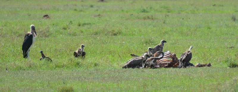 East Africa Safari 258.jpg