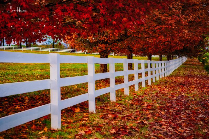 Fall fence lg.jpg