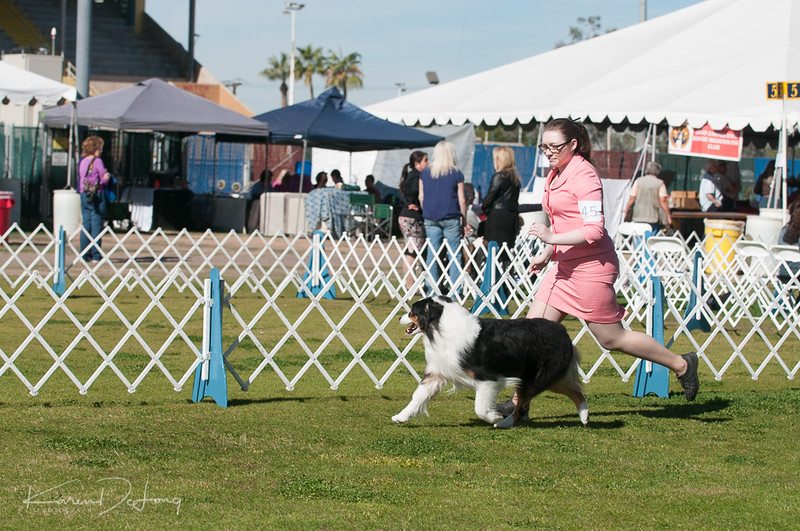 20170205_Australian Shepherds_Lost Dutchman Kennel Club-57.jpg