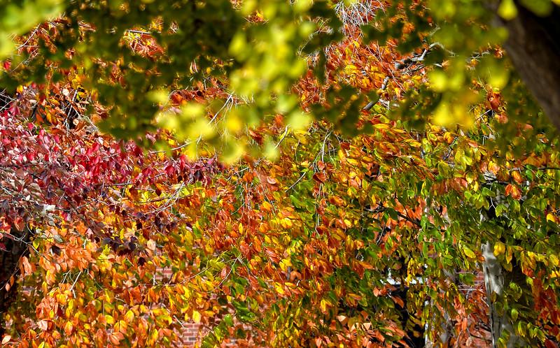 leaves3164.jpg