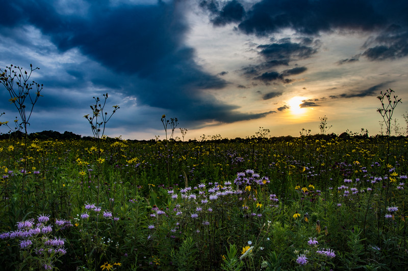 SFBog-sunset5-July.jpg