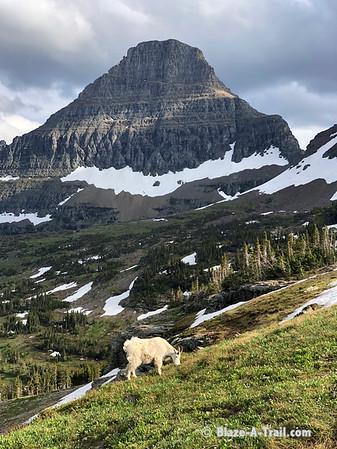 Glacier National Park (Father/Son Road Trip) July 2019)