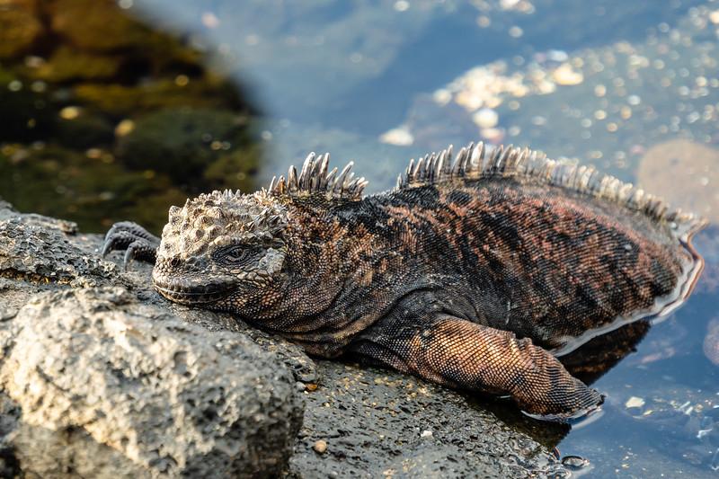 Galapagos-3382.jpg