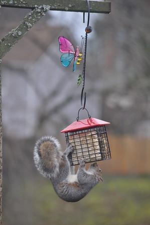 Bird Feeder Raider