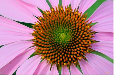 _DSC1603_1_2_tone_flower