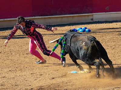 Portuguese Bloodless Bullfights, Thornton CA 2018