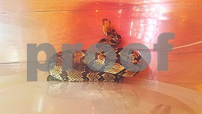 texas-wardens-crack-down-on-illegal-internet-wildlife-trade-in-houston-area