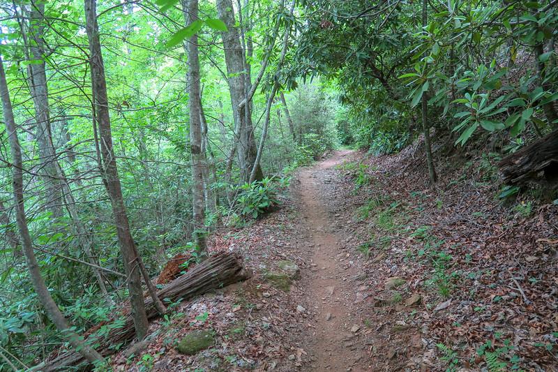 Fletcher Creek Trail -- 2,550'