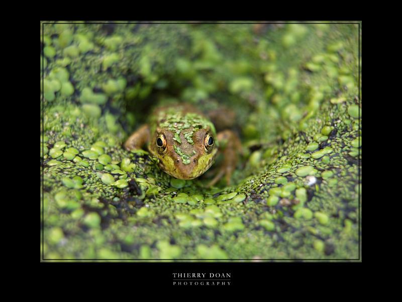 frog protrait.jpg