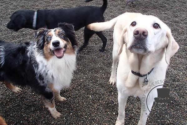 Doggy Daycare - January 2014