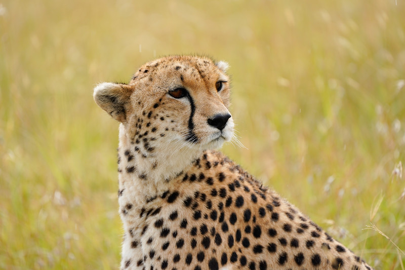 safari-2018-147.jpg