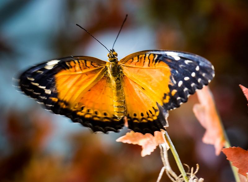 Butterfly 17.jpg