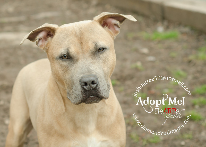Animals for Adoption