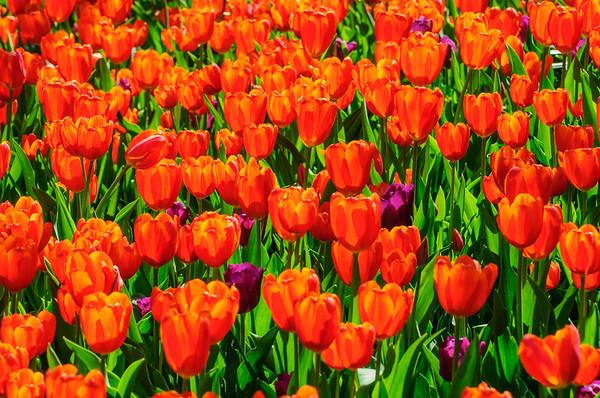 20070421 Cincinnati Zoo Blooms