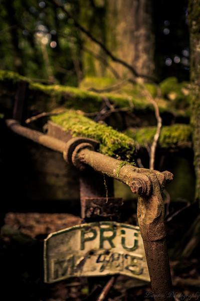 Misc Nature