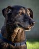 RescuedogsCanon_EOS_5D_Mark_III-2725