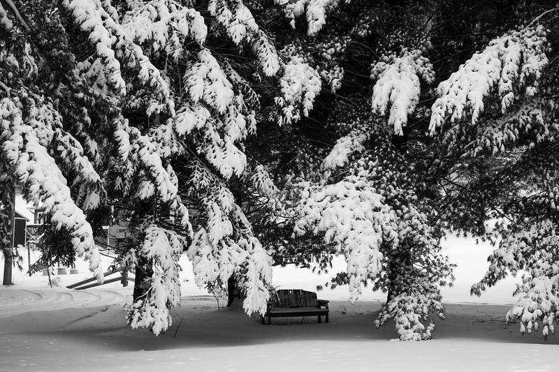 02-04-2021-winter-7.jpg
