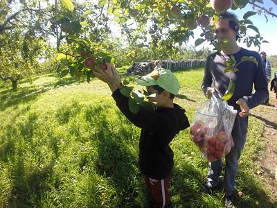 Autocueillet Pommes - 24 septembre 16