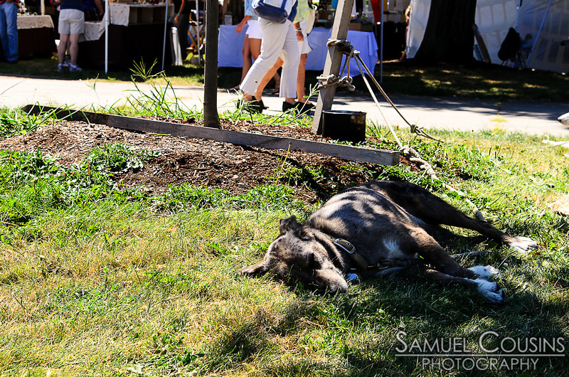 Dog sleeping on the grass at Picnic