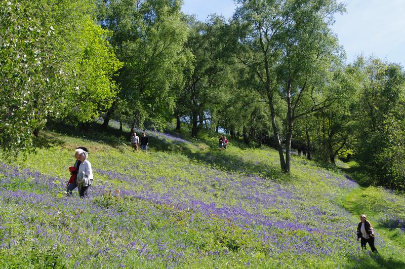 People amongst bluebells, Malvern.jpg