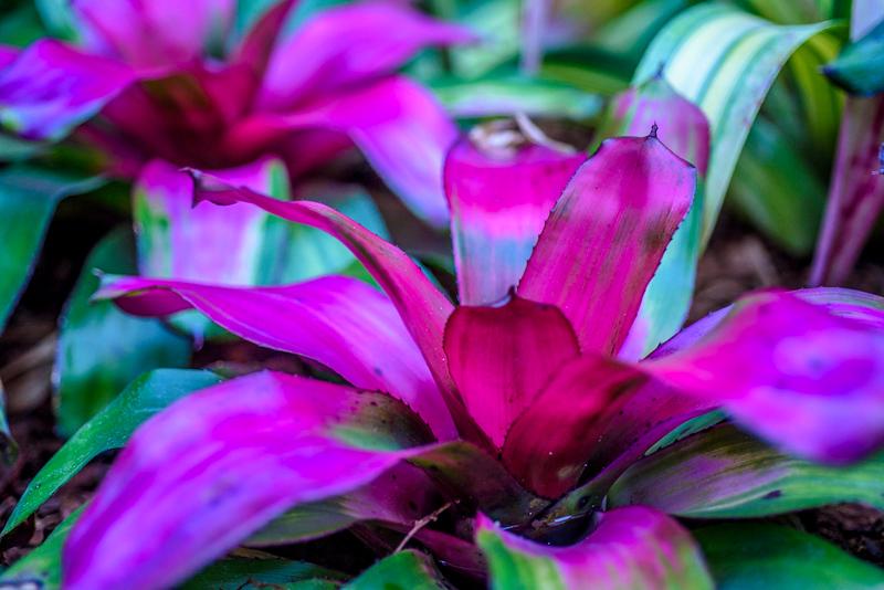 orchidroom-6.jpg