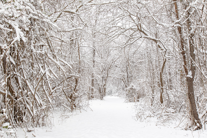 Snow13jan19-1353.jpg