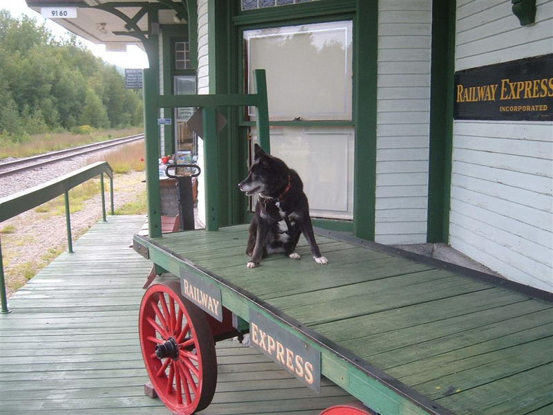 Again  Reagan is the only baggage at Gorham, NH Station as she waits for the train south.  July 29th 2012