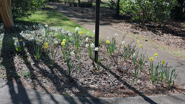 March 10:  Enjoying the early flowers .  .  .
