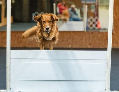 Joan Jung Dog Training