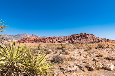 View of Red Rock range with cacti in left foreground