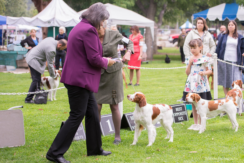 2019 Pasadena Kennel Club-7999.jpg