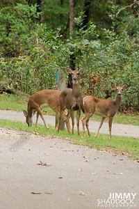 Boxley Elk Sept 26