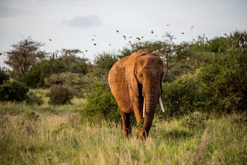 Samburu (56 of 70).jpg