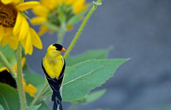 Flora Fauna Food