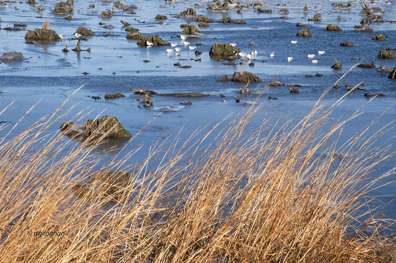 Jan 22_Mill Creek Marsh_4084.jpg