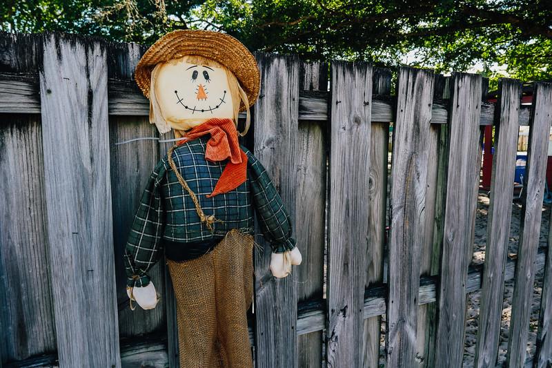 pumpkin patch 1 (1 of 1).jpg