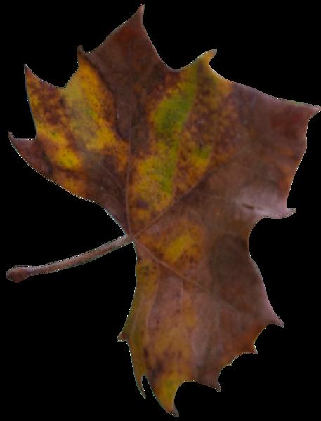 Leaf 26.png