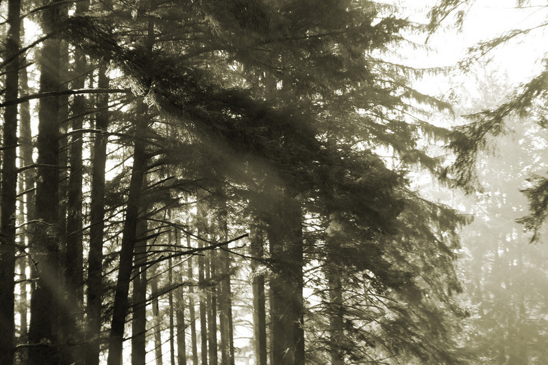 Trees and Sun Rays